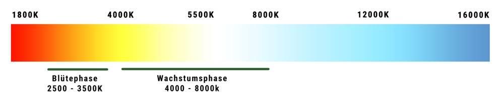 Farbtemperatur Tabelle optimale beleuchtung beim cannabis anbau hanfsamenladen