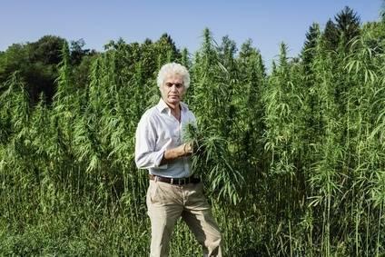 Cannabis Sativa Höhenwachstum