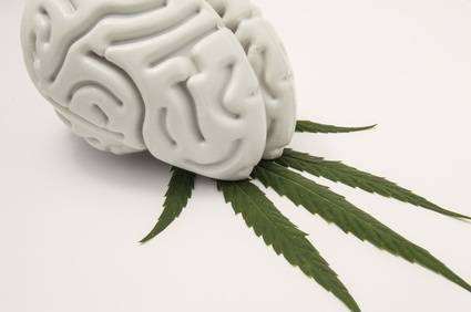 Cannabis Sativa Wirkung