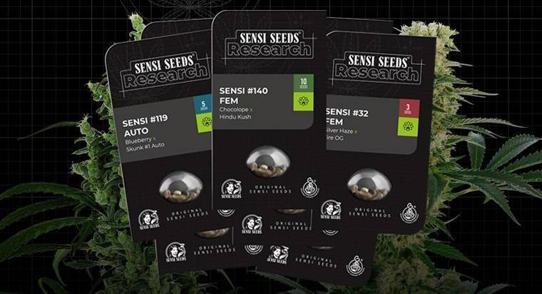 Research Serie Sensi Seeds