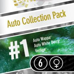Auto Collection Pack #1 - 6 Samen