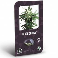 Black Domina Feminisiert (Classic Redux Serie) - 3 Samen