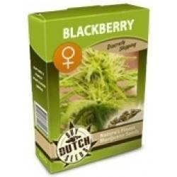 Blackberry Feminisiert - 5 Samen