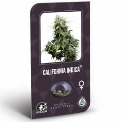 California Indica Feminisiert Classic Redux Serie