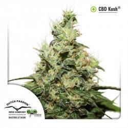 CBD Kush Feminisiert - 3 Samen