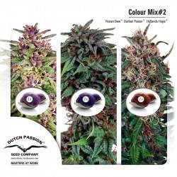 Colour Mix 2 Feminisiert - 6 Samen
