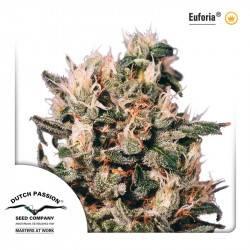 Euforia Feminisiert - 3 Samen