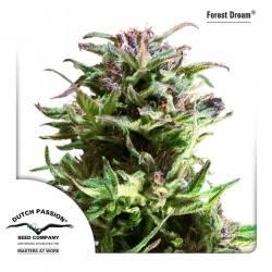 Forest Dream Feminisiert - 5 Samen