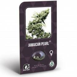 Jamaican Pearl Feminisiert (Classic Redux Serie) - 5 Samen
