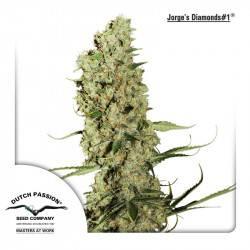 Jorges Diamonds Feminisiert - 3 Samen