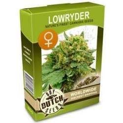 Lowryder Feminisiert - 5 Samen