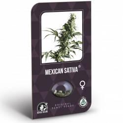Mexican Sativa Feminisiert (Classic Redux Serie) - 10 Samen