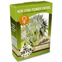New York Power Diesel Feminisiert - 5 Samen