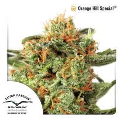 Orange Hill Special Feminisiert - 5 Samen