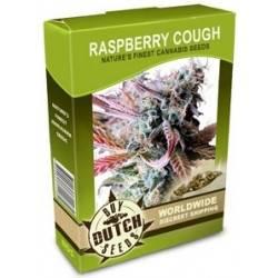 Raspberry Cough - 10 Samen