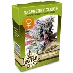 Raspberry Cough Feminisiert - 5 Samen
