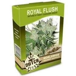 Royal Flush - 10 Samen
