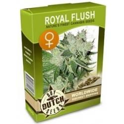 Royal Flush Feminisiert - 5 Samen