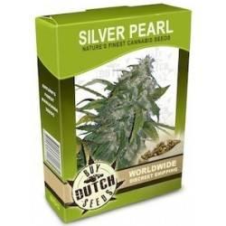 Silver Pearl - 10 Samen
