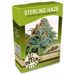 Sterling Haze - 10 Samen