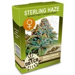 Sterling Haze Feminisiert - 5 Samen