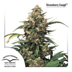 Strawberry Cough Feminisiert - 10 Samen