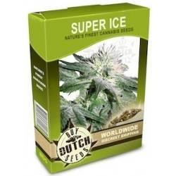 Super Ice - 10 Samen