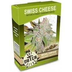 Swiss Cheese - 10 Samen