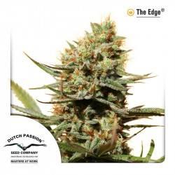 The Edge Feminisiert - 3 Samen
