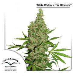 White Widow X The Ultimate - 10 Samen