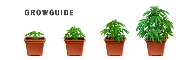 Growguide - Cannabis Anbau